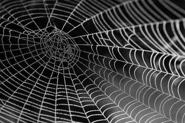 Webbed Learning spider web